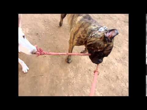 dogwalkers : Drago Blanka