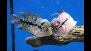 THE NEW FISH FIGHT RIGHT AWAY!!