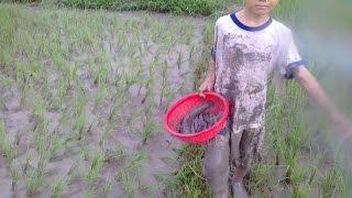 xem cậu bé đi bắt cá ngoài ruộng ông trời cũng phải đãi cho một ngày trúng lớn