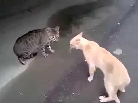 Лучшие видео ролики с животными,смешные приколы с котами