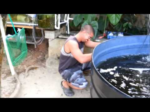 Tilapia Fishing 101