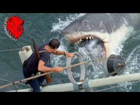 Tiburón - Desde dentro