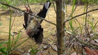 Jebakan burung menggunakan karet gelang