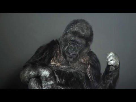 New World News Network -  Communist Propagandist Greatest Hits - Koko The Gorilla