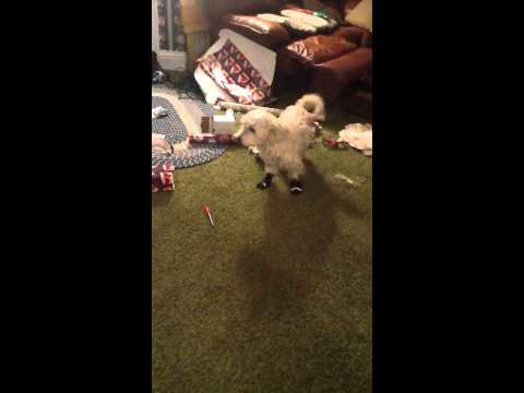 Dog Hate Booties