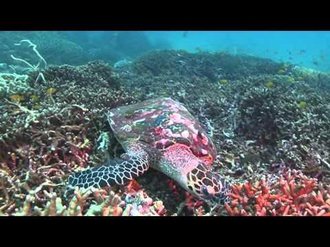 Sea Turtles Micro Documentary
