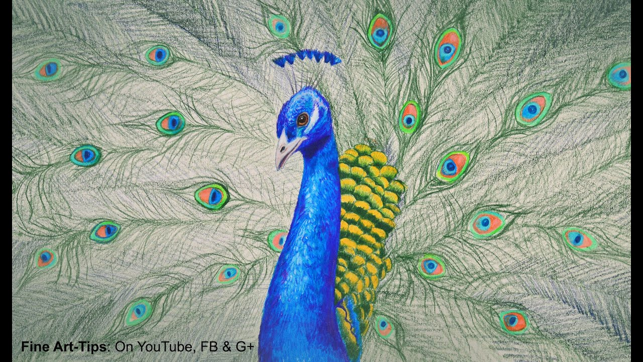 How To Draw A Peacock With Color Pencils Drawing