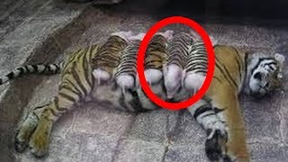 10 Unbelievable Animals ADOPTING Other Animal Species!