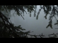 Lagu Relaxing Sound of Rain in Foggy Forest 1 Hour  Rain Drops Falling From Trees