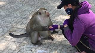 The Leader Monkey in Toa Thanh Tay Ninh