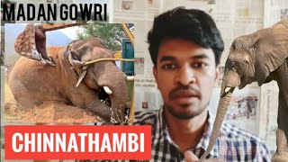 Chinna Thambi Issue   Tamil   Madan Gowri   Elephant