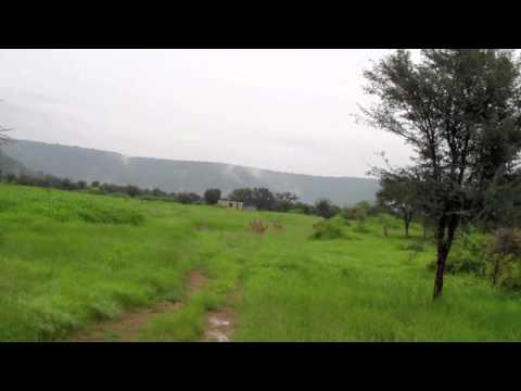 India Cheetah Re-introduction