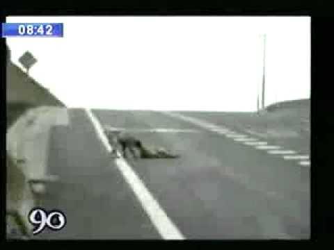 Un conmovedor video que muestra hasta dónde puede llegar la lealtad de los perros.