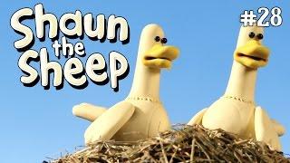 Shaun the Sheep - Bebek Zebra [Zebra Ducks of the Serengeti]