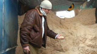 Dry pine sawdust Ukraine | Wood shaving for poultry bedding