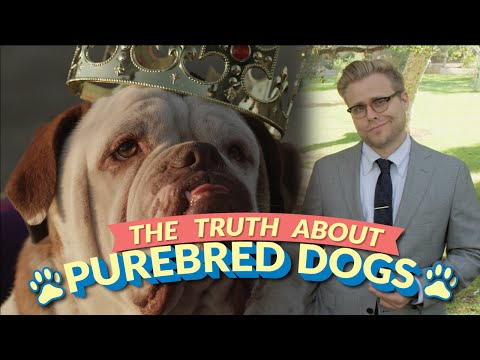 0 The Bizarre Truth About Purebred Dogs (and Why Mutts Are Better)   Adam Ruins Everything