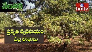 Natural Farming Guide By Haribabu | Importance of Natural Farming | Nela Talli | hmtv