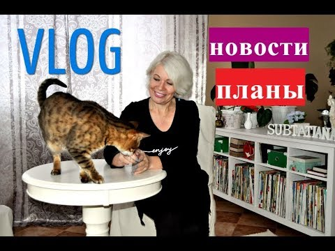 VLOG.Последние новости и планы.Отпуск кошки реклама ковер