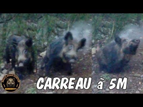 Battue Aux Sangliers Dans Le Gard :Tir D'un  Beau Sanglier à 5m