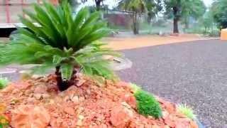 Diseño y decoracion de Jardines deserticos en mexico