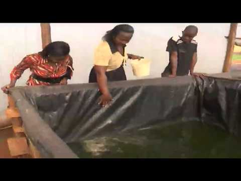 Kenya's highlands farmers embracing fish farming as an alternative source of income