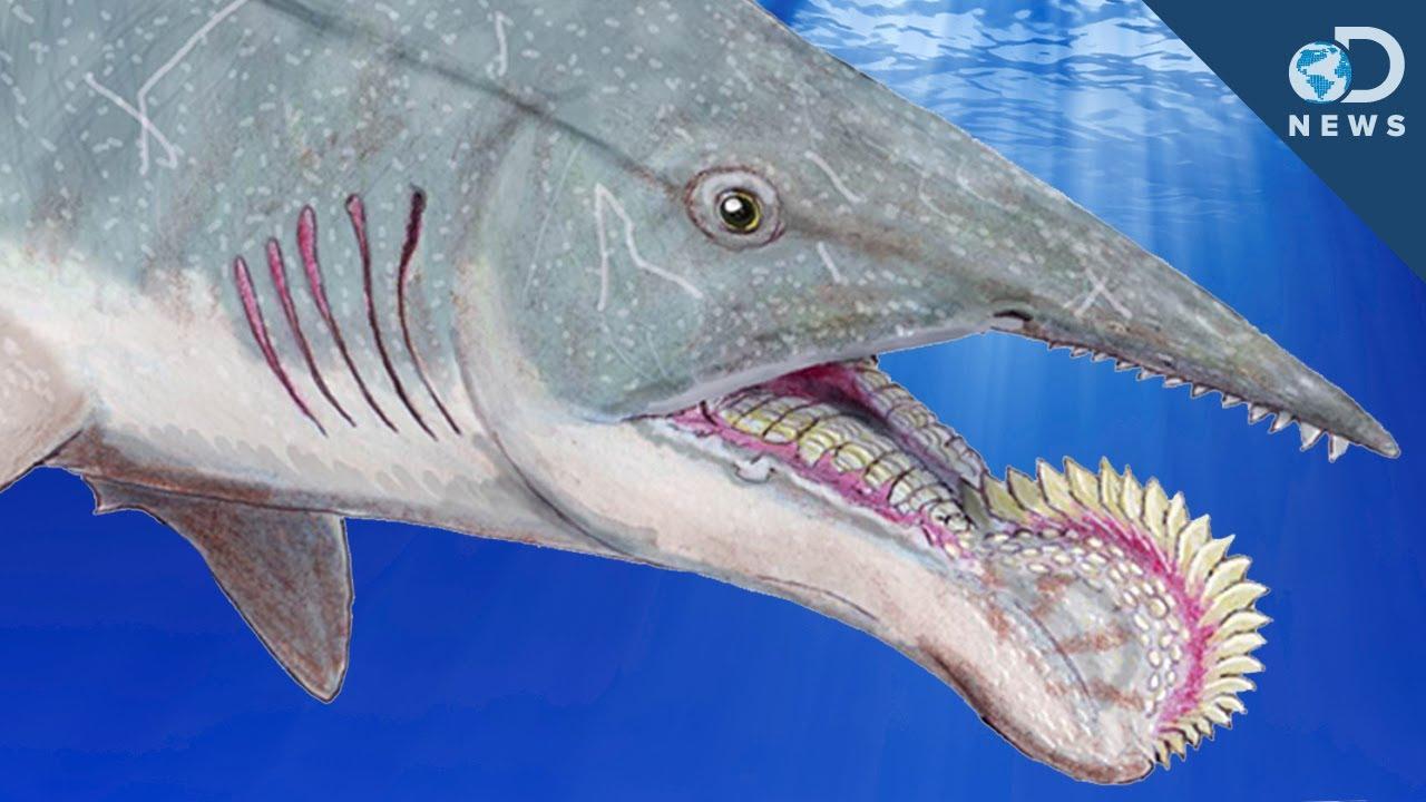 maxresdefault jpgWorlds Scariest Shark