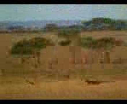 Bosanac U Africi video