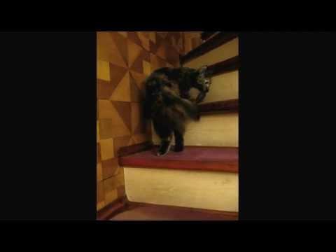 尻尾を咥えた猫が、くるくる回りながら階段を上っていきます♪