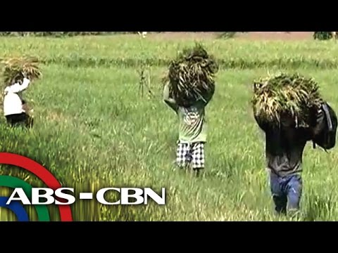 How communities are preparing for typhoon 'Chedeng'?
