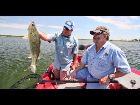 Big Walleye Tactics in Shallow Water South Dakota Glacial Lakes