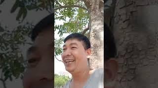 Trần Đình Sang CHĂN TRÂU tại CSGT Tĩnh Gia Thanh Hóa