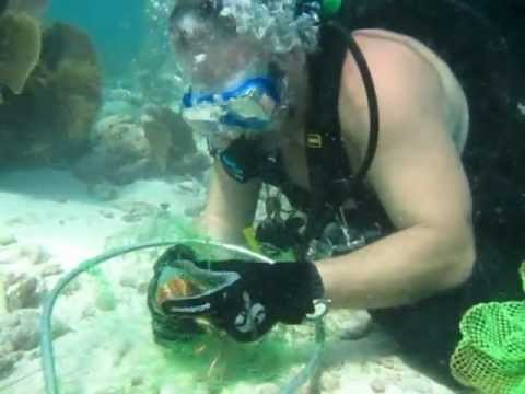 How To Scuba Dive Florida - Lobster Hunting Florida Keys