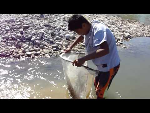 Red para sacar camarón de agua dulce