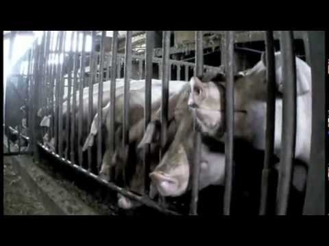 Stress behaviour | Harling Farm