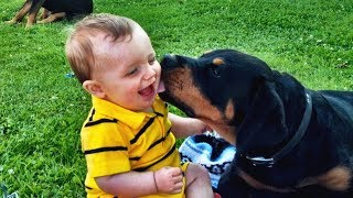 Adorable Moment Cute Baby Surprised With Dog! ★Try Not To Cry Challenge★ Dog love baby