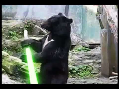 Kung Fu Bear Finds  a Light Saber