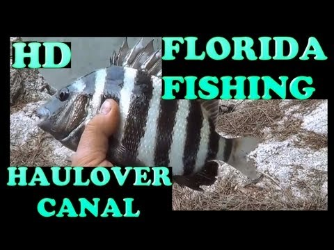 FLORIDA FISHING ,  HAULOVER CANAL  , MANATEE & DOLPHIN