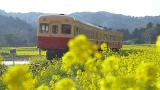 "【千葉PR】春(3)小湊鉄道 ""An old-style train becomes a nostalgia express"" Promotion Movie"