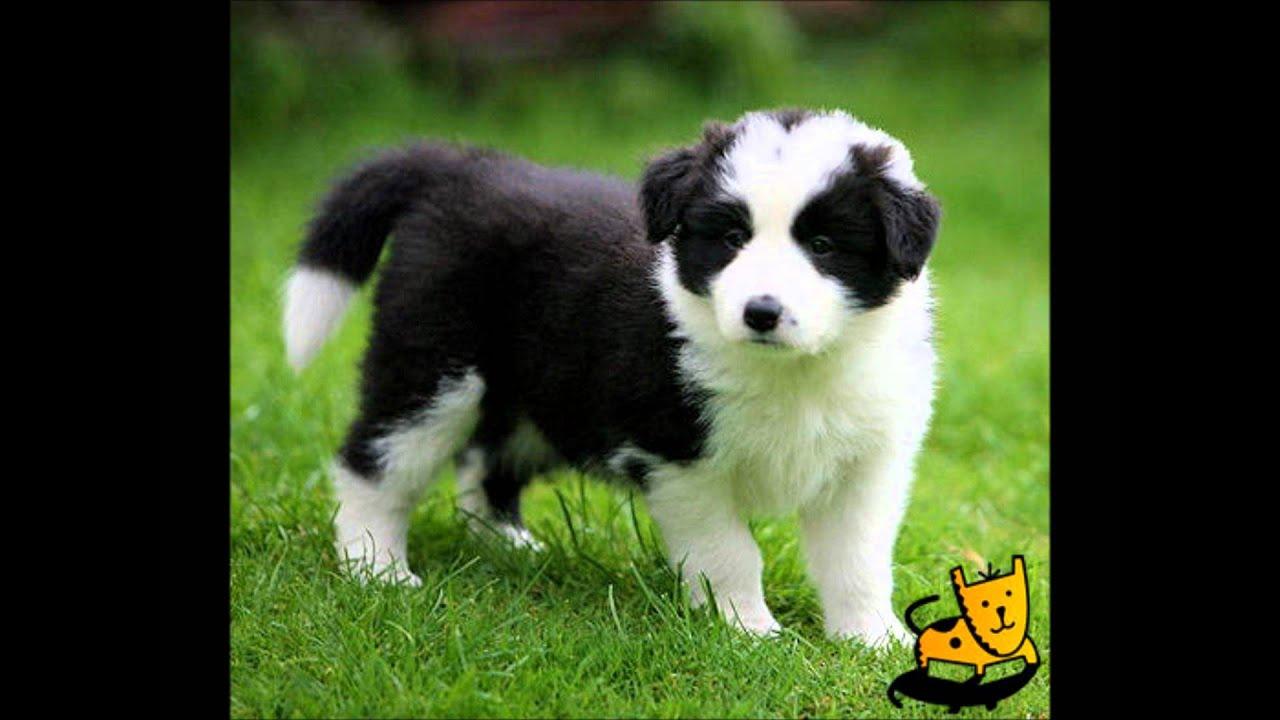 Top  Cutest Dog Breeds