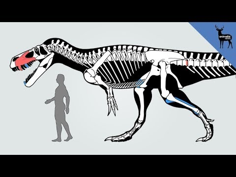 New Dinosaur Discovered in Portugal! klip izle
