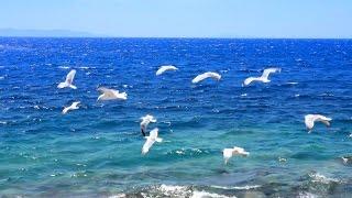 Musique Relaxante - Vidéo HD - Paysages, Nature... Relaxation