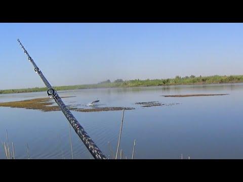 запрет на рыбалку в шымкенте 2016