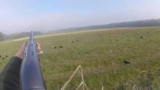 Magnifique chasse au corvidés en multicam !