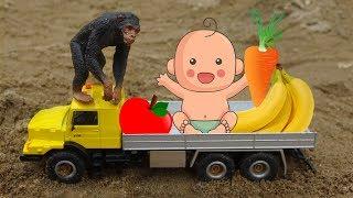 Chú Tinh Tinh lái xe ô tô tải đi hái hoa quả cho em bé - đồ chơi trẻ em FMC B1163T