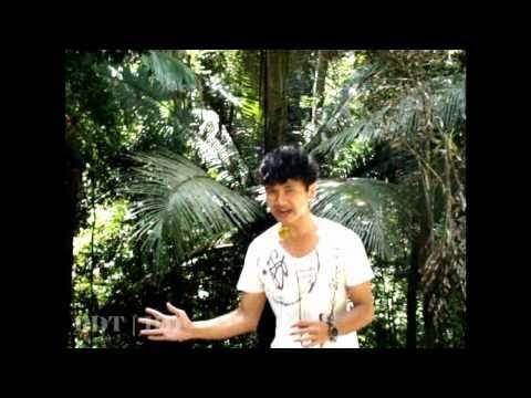 PALM DU TONG Documentary   Khao Pu Khao Ya National Park