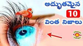Top 10 Unbelievable Facts That You Never Know | Top Most Amazing Facts by Planet Telugu