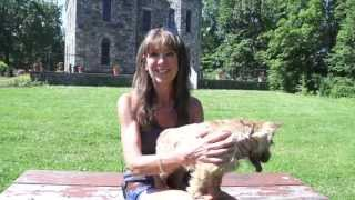 First Choice Canine's Dog Training for Jax, a Dover, MA Norwich Terrier