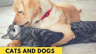 Ultimate Cute Cats and Funny Dogs Compilation 2018 - Part-5
