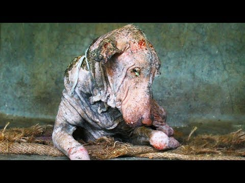 This Dog Was Sick And Covered In Mange. But The Photos Of His Transformation Are Heartwarming en streaming