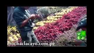 taller de propagación de plantas ornamentales